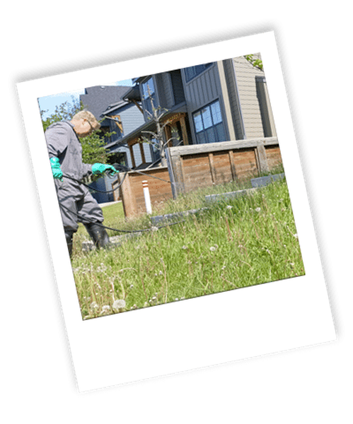 Weed Removal Calgary
