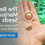 ▷ Online Where To Buy Weed In Hamilton | Canada
